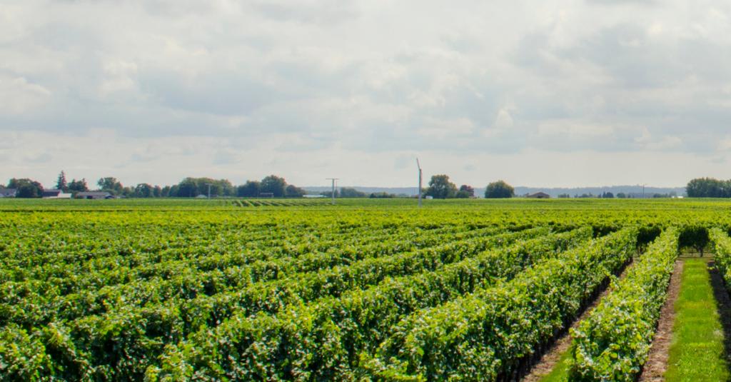 Devenir Conseiller Clientèle des Agriculteurs avec l'IHEDREA !